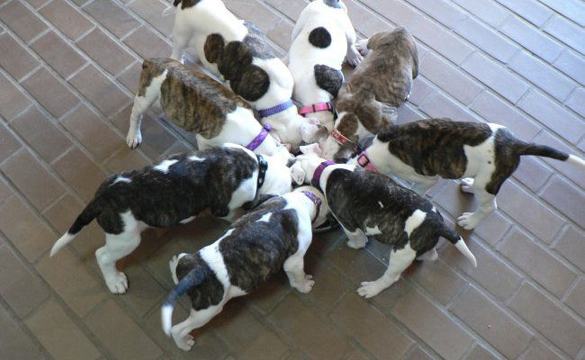 Dogs Sharing Food